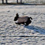 ćwiczenia na śniegu2