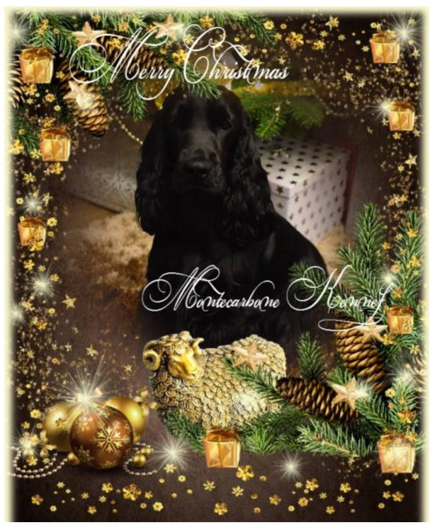 merry-christmas-montecarbone-kennel