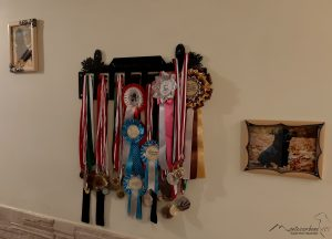 Hanger for medals and rossets
