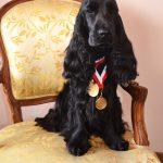 Magnolia z medalami