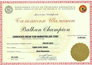Champion Bałkan
