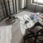 enzo w nowym domu (3)